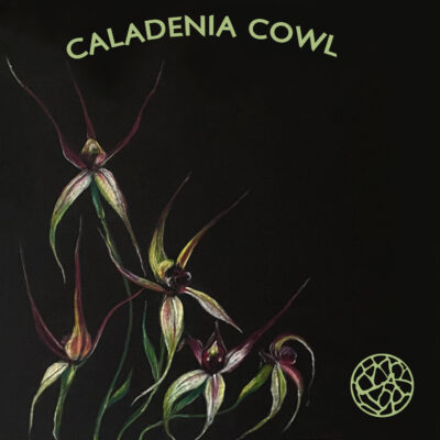 Caladenia Cowl